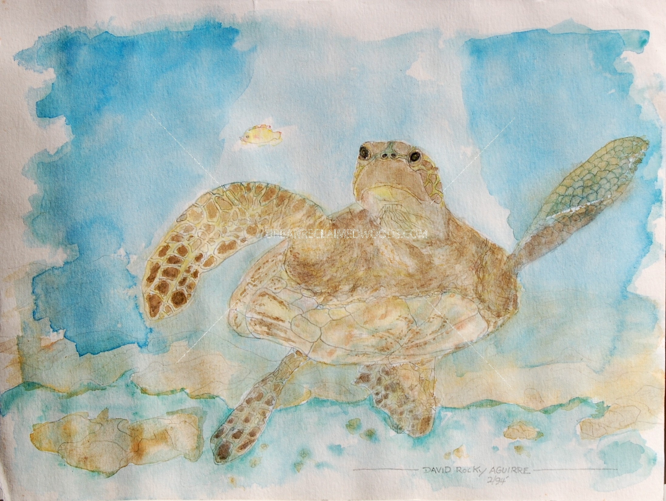 "Original Watercolor painting 9"" x 12"" on paper- Hawaiian Turtle"